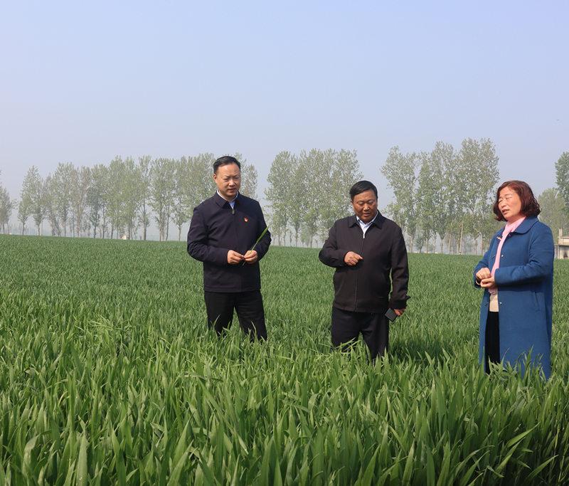 4月8日县长王景育调研农业生产相关工作.6_副本.jpg
